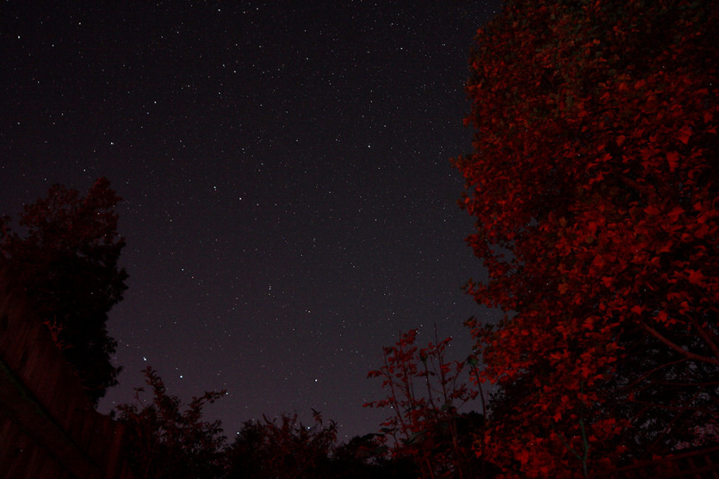 Ursa Major skirting the treetops